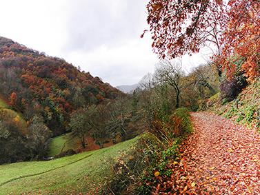 ptif_bt281-montanas-en-outono