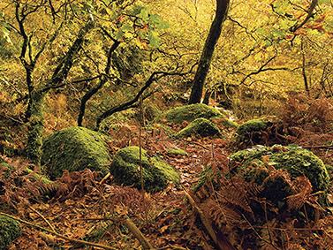 ptif_bt282-bosque-en-outono