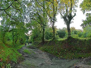 ptif_bt344-camino-entre-arbores