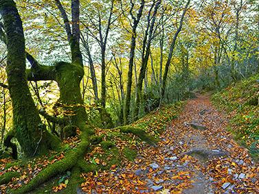 ptif_bt345-camino-nun-bosque-en-outono