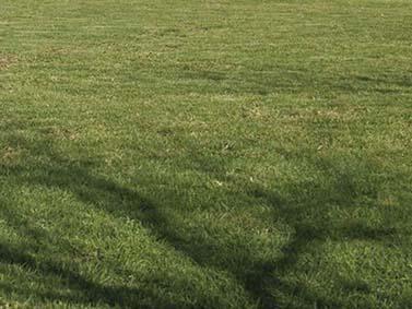 ptif_bt513-campo-de-herba