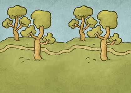 ptif_pictosdocamino_44_bosquea6-arbores